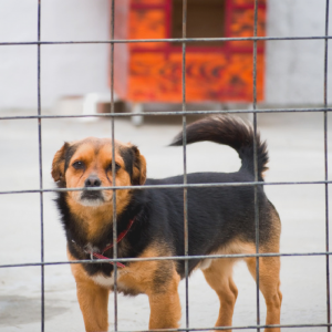 adopt-shelter-dogs